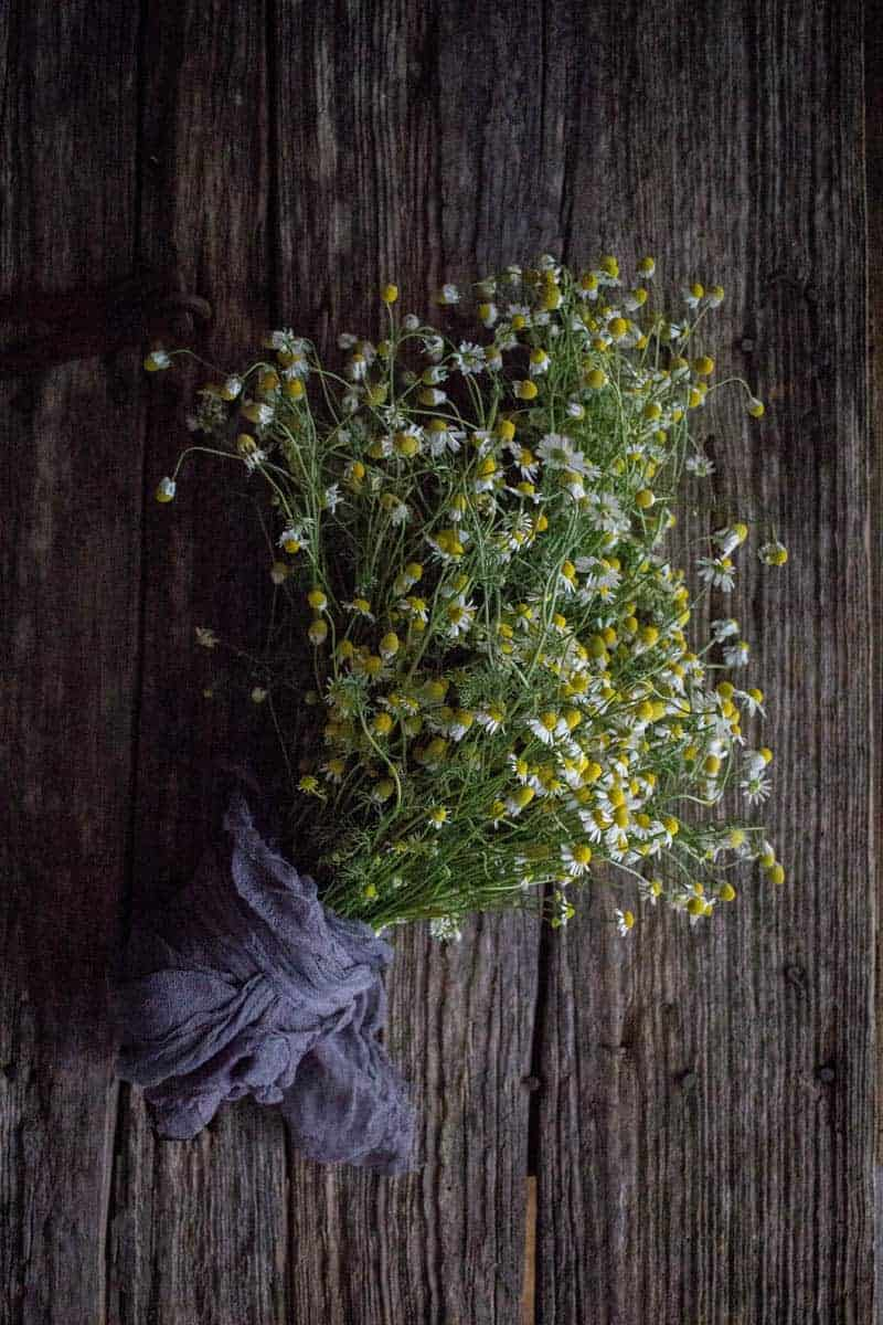 5 Delicious Ways to Indulge with Fresh Chamomile by @vigorandsage & @beardandbonnet onwww.thismessisours.com