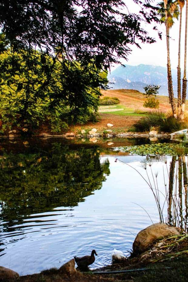 A beautiful scene high in the hills of central California. A small pond overlooks a plot of land nestled in the. Clouds engulf the hills in the distance.Ducks are swimming in the pond.