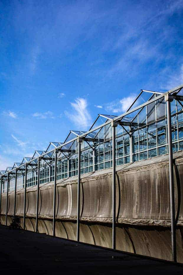 A row of very large industrial greenhouses in California