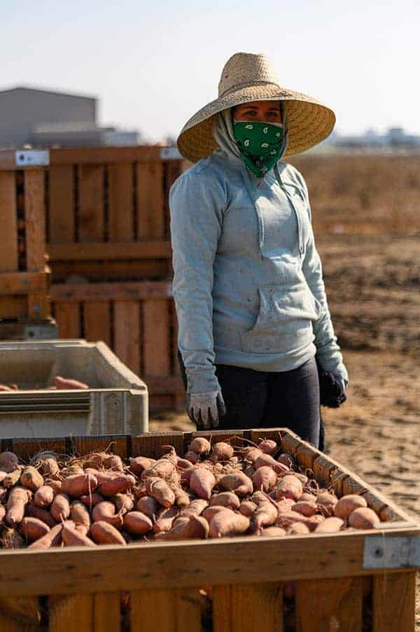 A sweet potato farm worker next to a crate of sweet potatoes