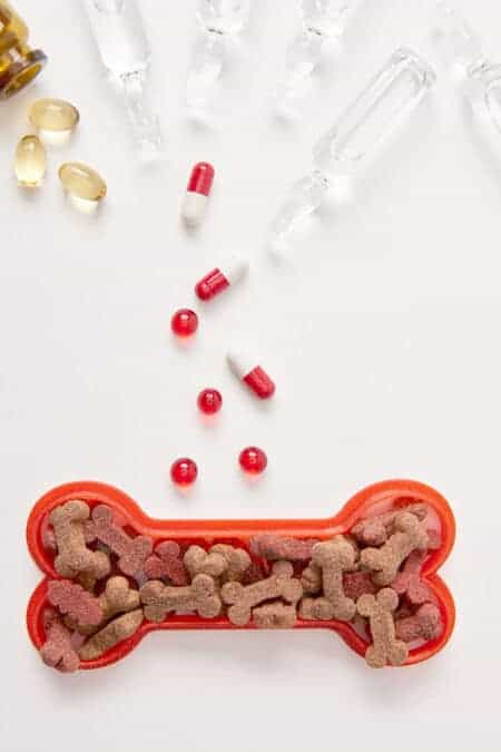 What I learned about Dog Vitamins and Kidney Disease